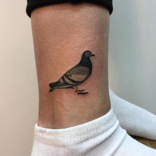 tatuaje paloma comun